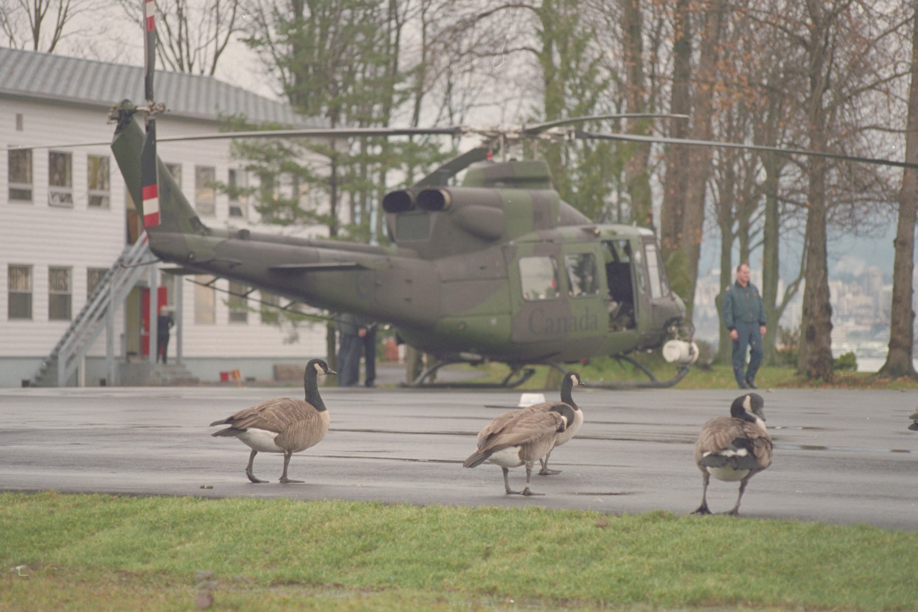 408 Squadron ch-146 Griffon helicopter attracts other birds on the pad at Her Majesty's Canadian Ship Discovery in Vancouver, British Columbia, in 1997. PHOTO: Sergeant Ed Dixon